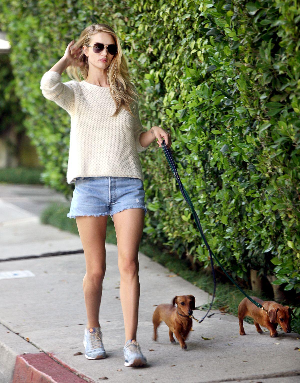Rosie Huntington-Whiteley and Jason Statham take dogs for