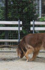 AMANDA SEYFRIED Walks Her Dog Finn Out in New York 06/16/2015