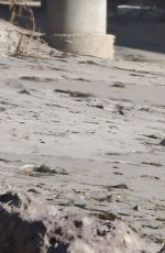 DENISE RICHARDS Walks Her Dogs at a Beach in Malibu 11/19/2015
