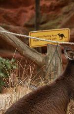 SABRINA CARPENTER at Wildlife park in Sydney 08/14/2016