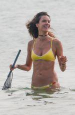 ALESSANDRA AMBROSIO in Bikini on the Beach in Santa Catarina 12/30/2016