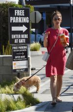 MINKA KELLY Out with Her Dogs in Los Angeles 05/27/2017