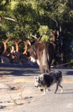 LISA BONET Out with a Donkey and a Dog 11/06/2017