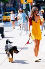 EMILY RATAJKOWSKI Out with Her Dog Colombo in New York 08/18/2019