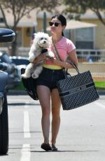 LUCY HALE Out with her Dog in Studio City 06/27/2020