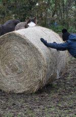 SUMMER MONTEYS-FULLAM at a Farm in Canterbury 12/28/2020