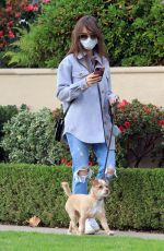 LILY COLLINS in Ripped Denim Out with Her Dog in Los Angeles 01/22/2021